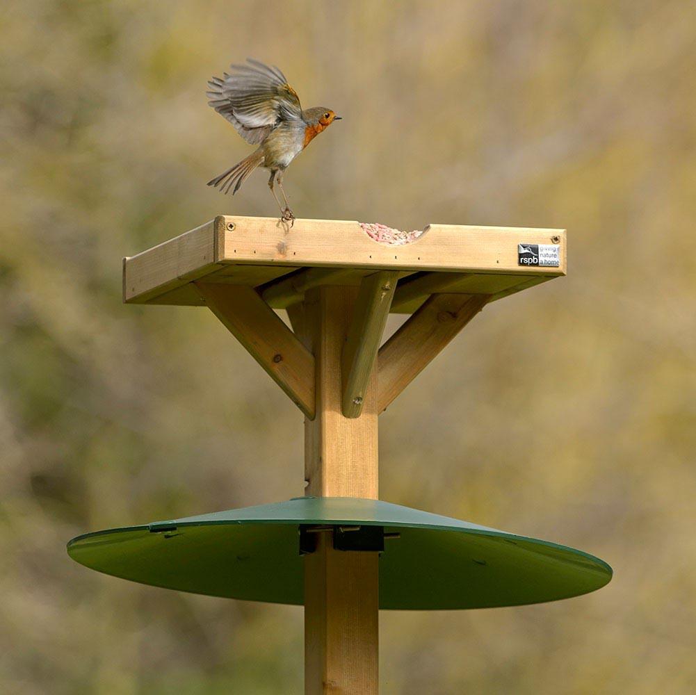 Baffle for Bird Feeder