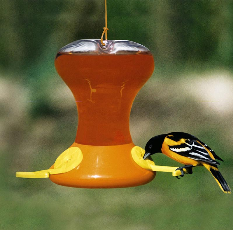 Baltimore Oriole Bird Feeder Plans