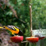 Baltimore Oriole Bird Feeders