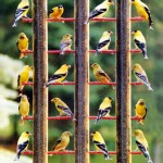 Best Bird Feeders for Finches