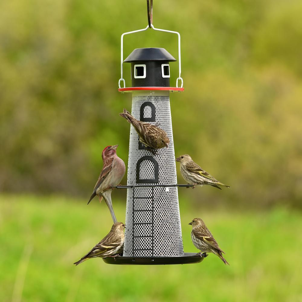 Best Finch Bird Feeders