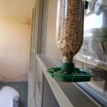 Best Place to Hang a Bird Feeder