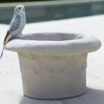 Bird Bath Tops Concrete