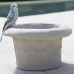 Bird Bath Tops Concrete