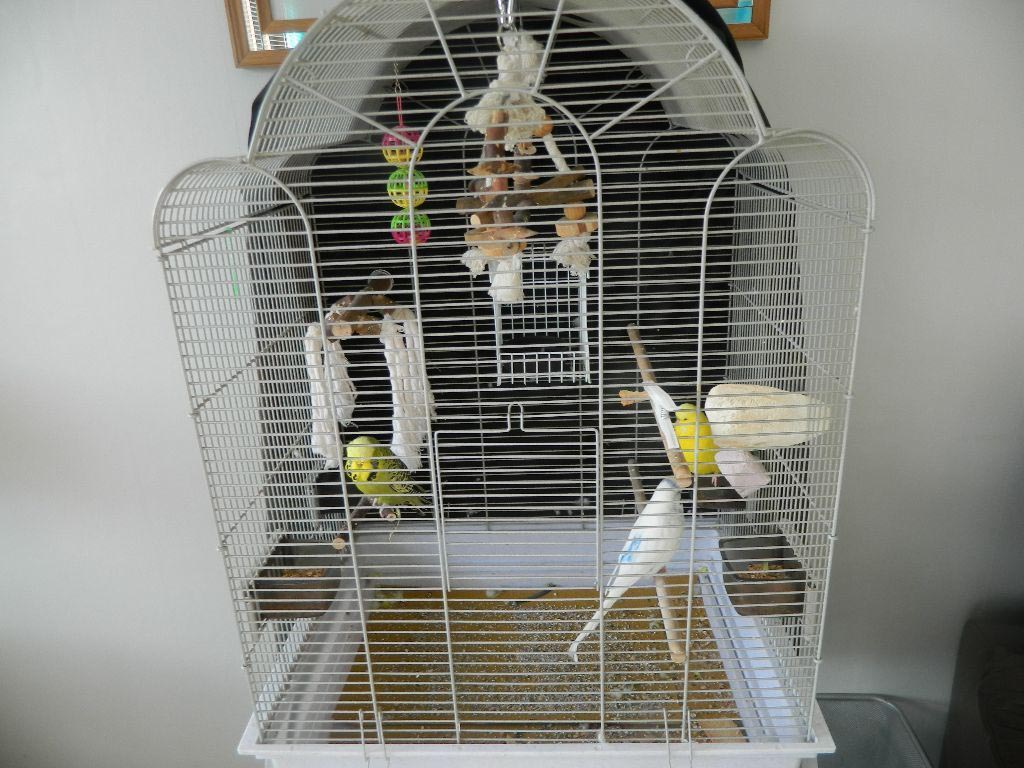 how to build a large bird cage