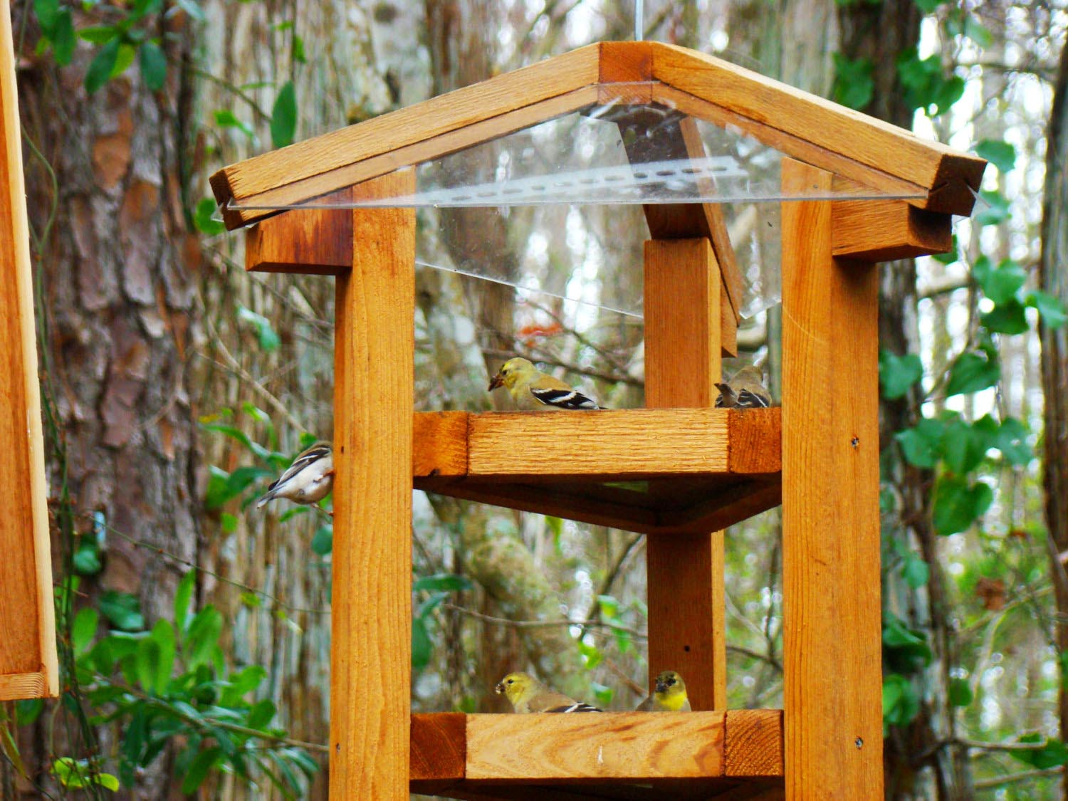 Bird Feeder Baffle 4x4 Post