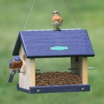 Bird Feeder Hanger Pole