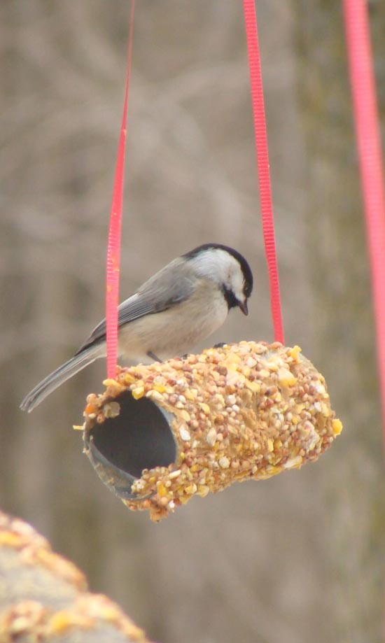 Bird Feeder Kid Craft