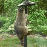 Bird Feeder Pole Baffles