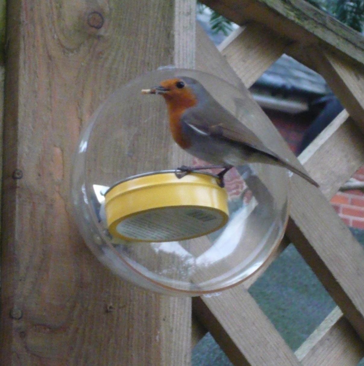 Bird Feeder Squirrel Baffle Homemade