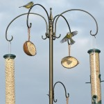 Bird Feeder Stations Stands