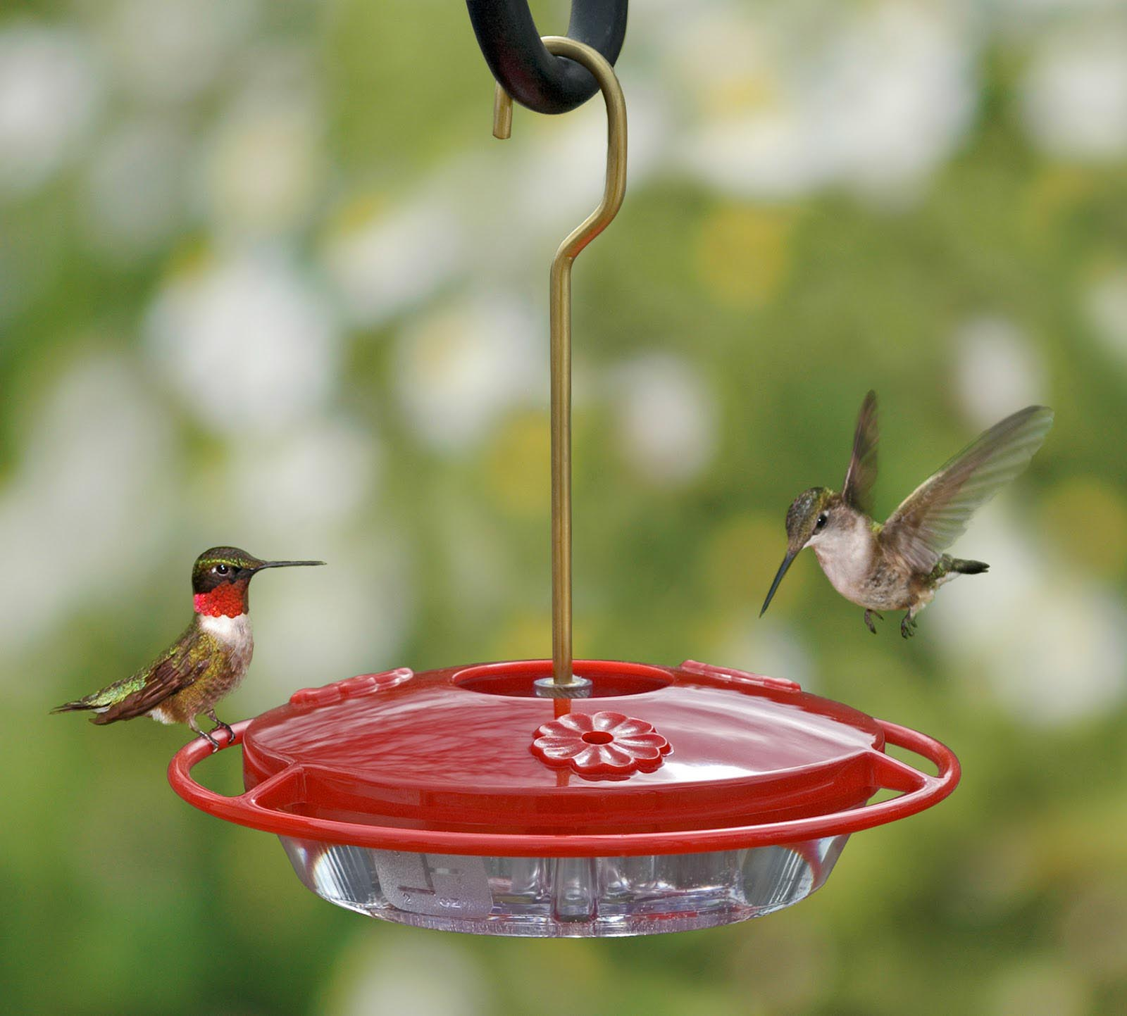 Bird Feeder Sugar Water Recipe