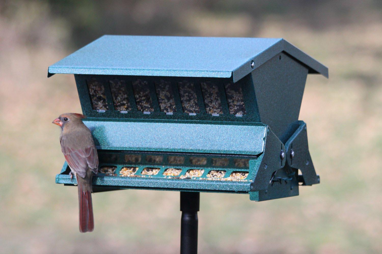 Bird Feeder Tree Hangers