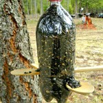 Bird Feeder Water Bottle