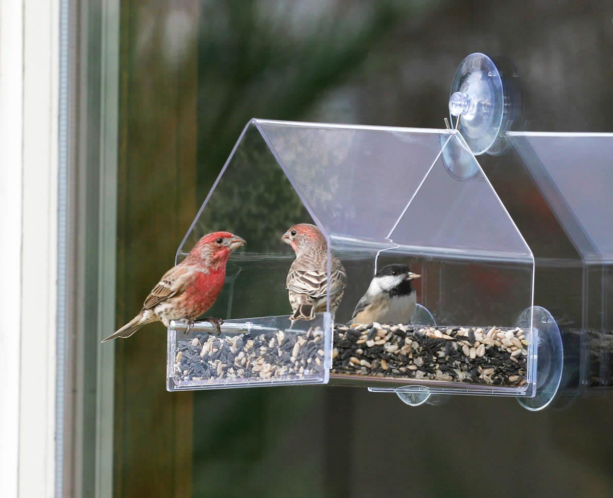 Bird Feeder Window Hanger