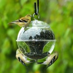 Bird Feeder with Baffle