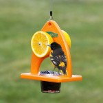 Bird Feeders for Baltimore Orioles
