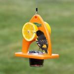 Bird Feeders for Baltimore Orioles