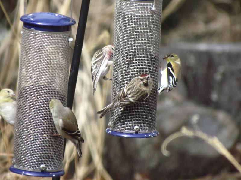 Bird Feeders for Finches