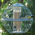 Bird Feeders for Large Birds