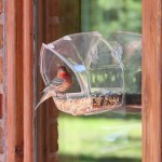 Bird Feeders for Large Wild Birds
