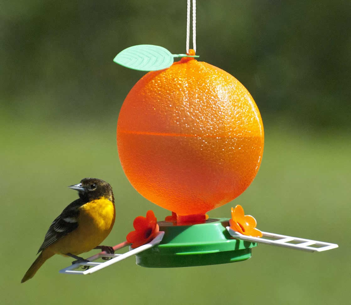 Bird Feeders for Orioles
