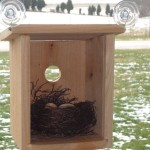 Bird House Glass Window