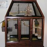 Birds Cage Design Wooden