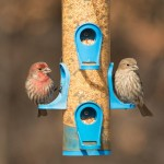 Birds Choice Finch Feeder