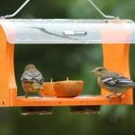 Birds Choice Oriole Feeder
