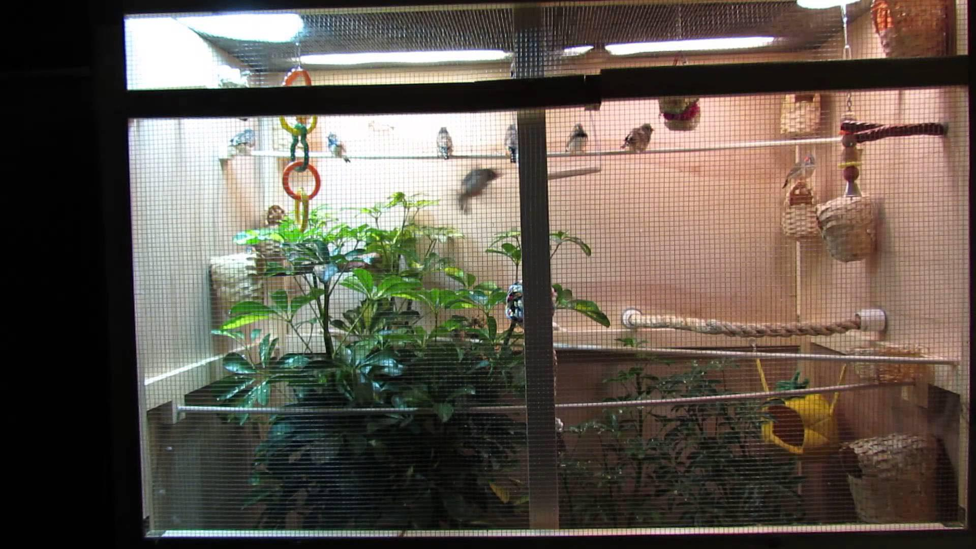 Birds in Glass Houses Indoor Aviaries