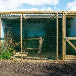 Build an Outdoor Bird Aviary
