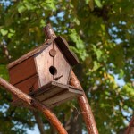 Build Wren Bird House