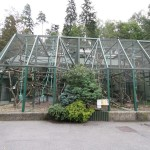 Building Bird Aviary Plans