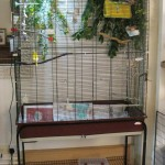 Cage and Aviary Birds Classifieds