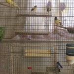 Cage and Aviary Birds Subscription