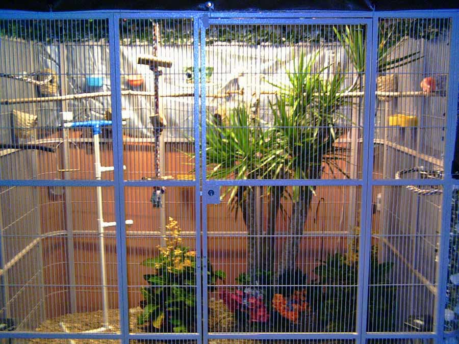 Cage and Aviary Birds