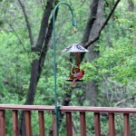 Deck Mounted Bird Feeder Hanger