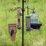 Deluxe Bird Feeder Station