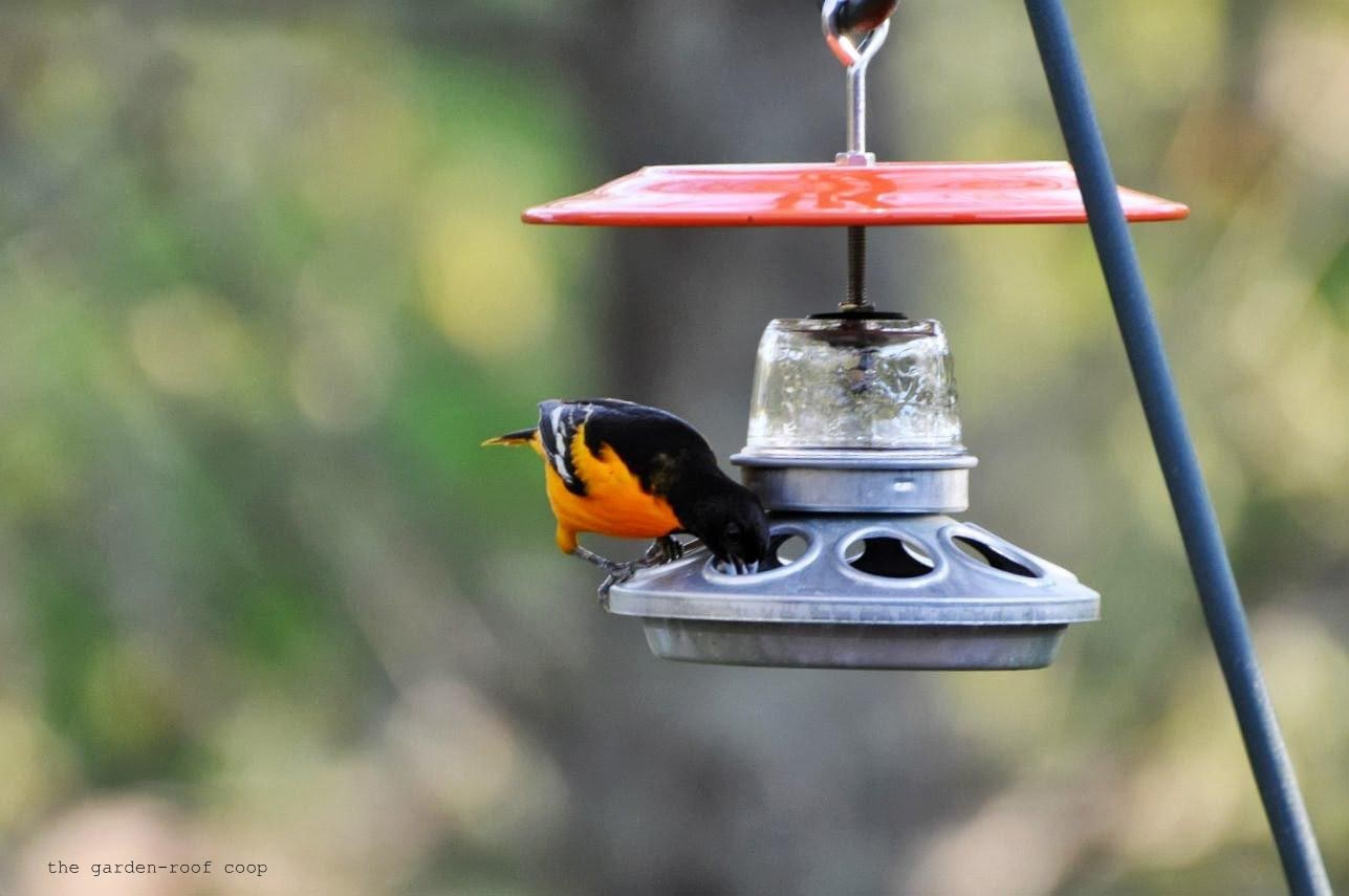 DIY Oriole Bird Feeder