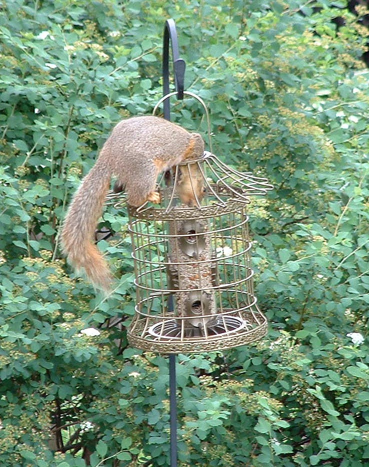 DIY Squirrel Proof Bird Feeder Pole
