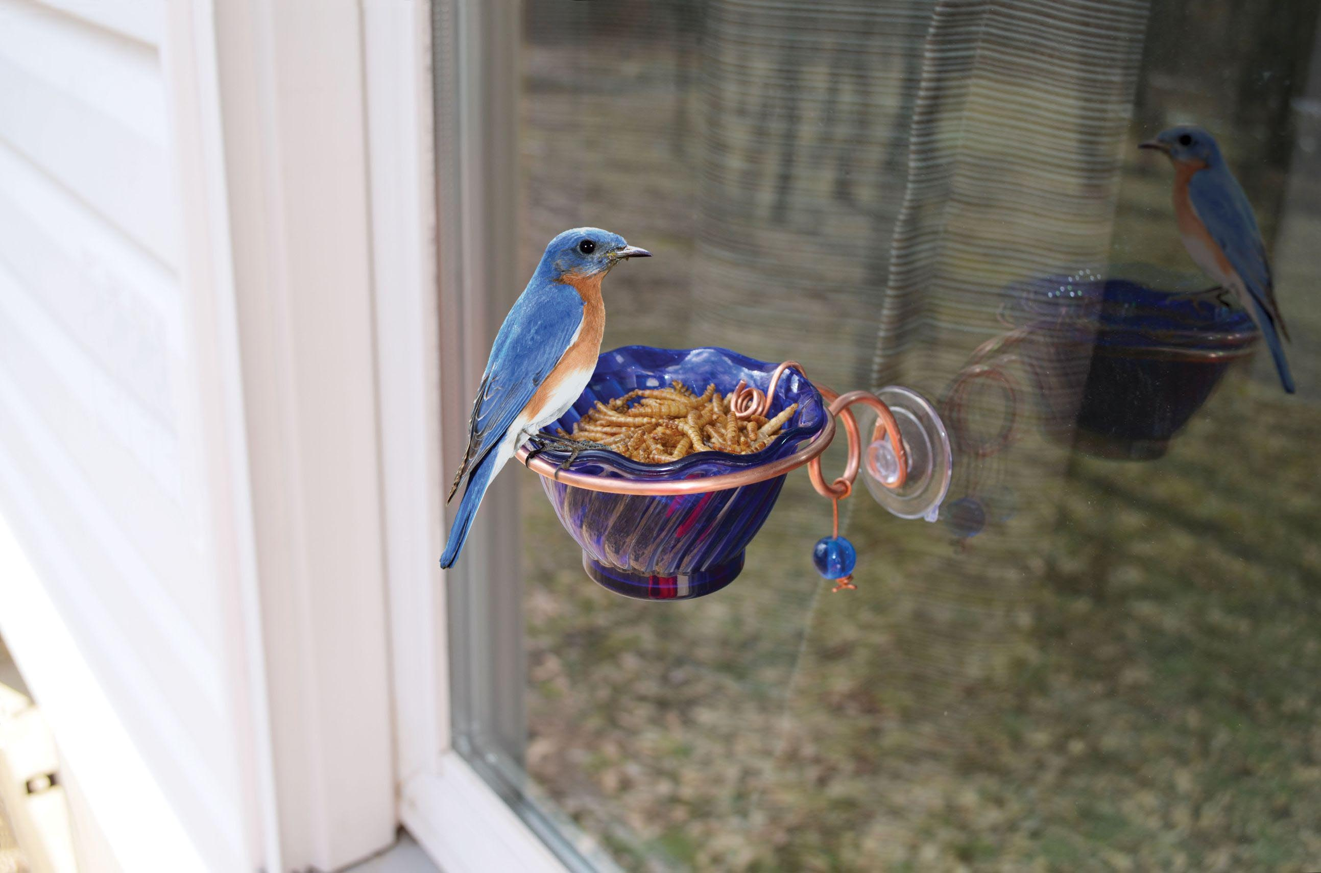 Do Window Bird Houses Work