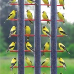 Finch Bird Feeder Location