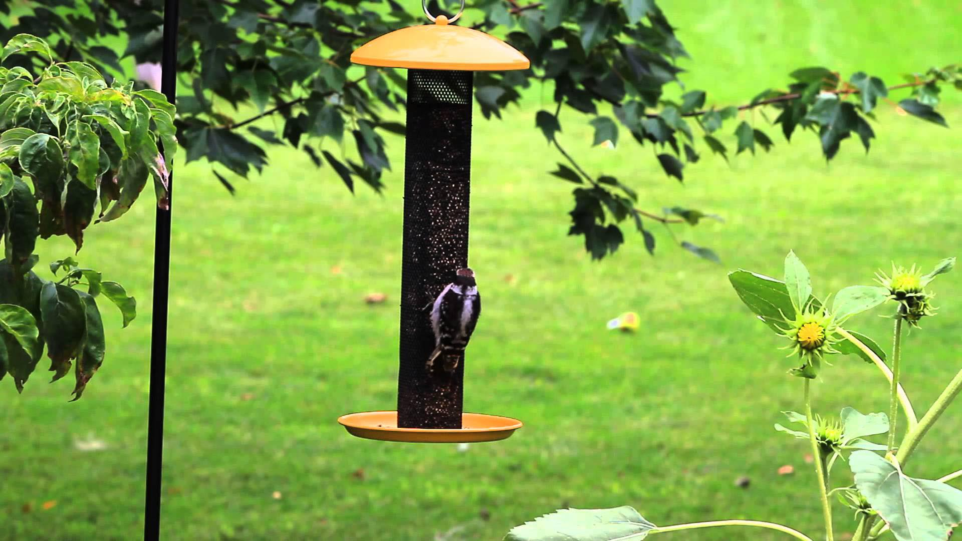Finch Bird Feeder Placement