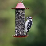Finch Bird Feeders Squirrel Proof