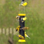 Finch Bird Seed Feeders
