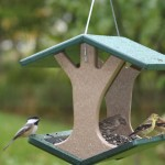 Hang Bird Feeder from Tree