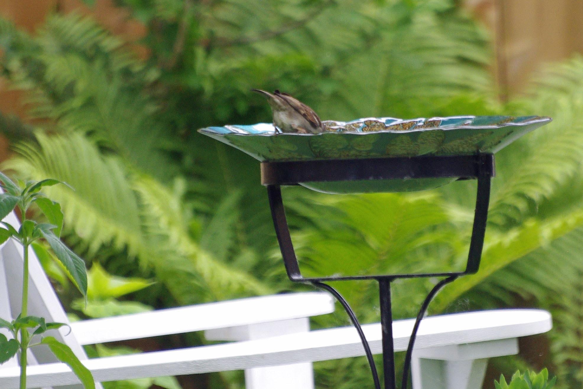 Hanging Bird Bath DIY