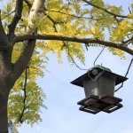 Hanging Bird Feeder from Tree
