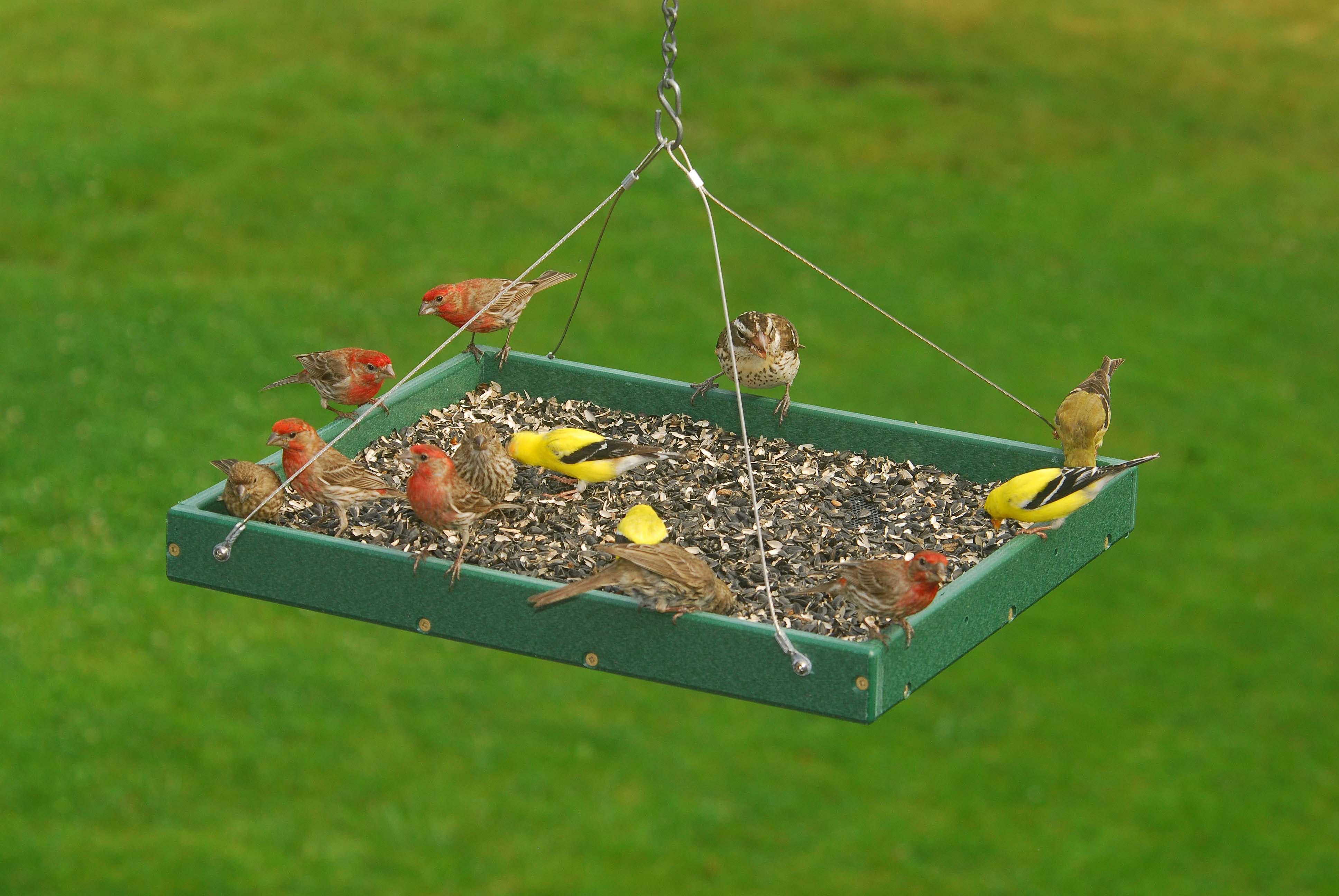 Hanging Bird Feeder Trays